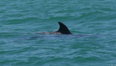 Dolphin Pos Id 3