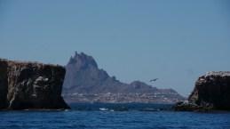 Isla Pastel Teta Pelicano