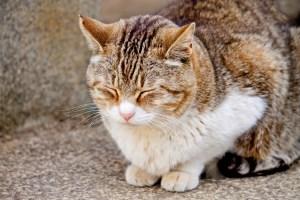 hypnosis sleep cat