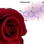 Pelajaran Kimia SMA : Asam dan Basa