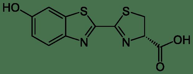 Ilmu Kimia di Balik Cahaya Kunang-kunang