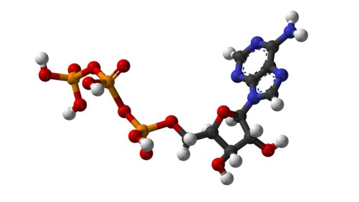 Struktur 3D dari ATP