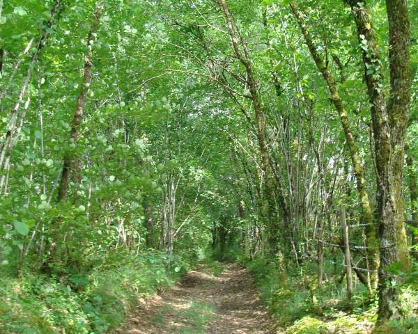 Chemin randonnée Grand Breuil