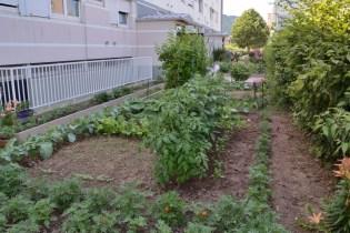 Jardins_Partagés_Kellermann (8)