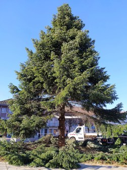 Coupe_Grand_Sapin_PGdG (3)