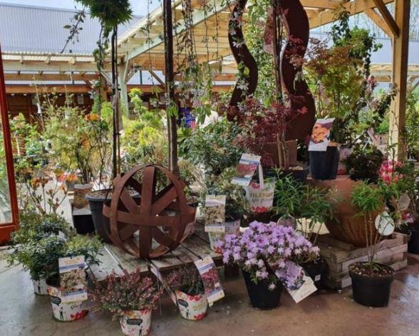 Gamm Vert photo fleurs diverses