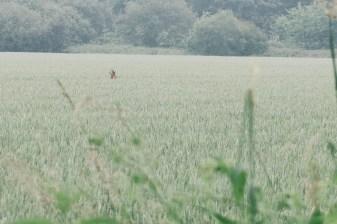 Nous avons eu la chance de voir un jeune cerf gambader dans un champ
