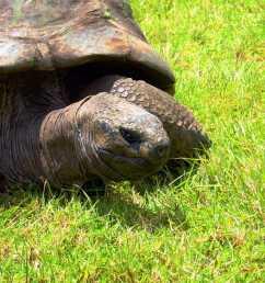 jonathan the tortoise saint helena island info jonathan the tortoise the world rsquo  [ 1600 x 1067 Pixel ]