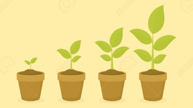 71 Gambar Jaringan Pada Hewan Dan Tumbuhan Beserta Keterangannya Gratis