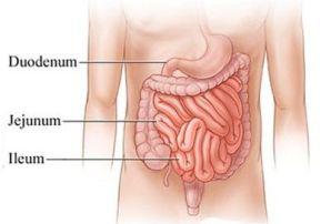 Penjelasan Sistem Pencernaan Manusia Fungsi Dan Anatominya
