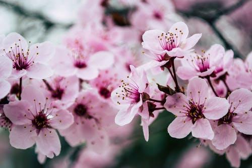 10 Gambar Bunga Cantik Dan Indah Berbagai Jenis