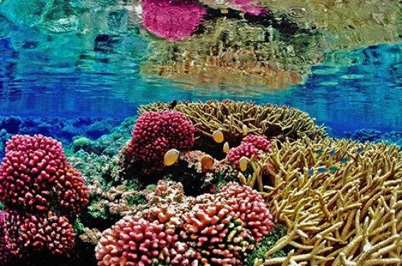 terumbu karang adalah