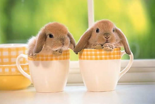 Cute Easter Bunny Pics I15 Saint John Marina