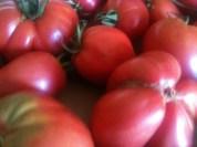 Tomates coeurs de boeuf
