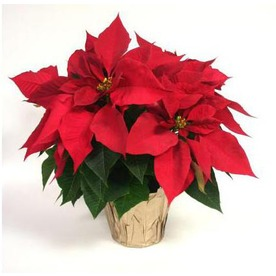 Eighth Grade Pointsettia Sale