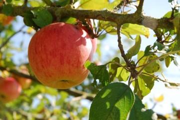 de bons fruits
