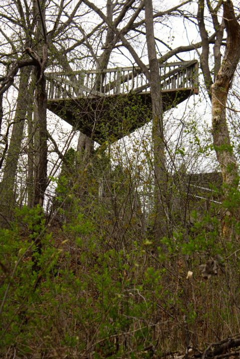 I stopped to admire a structure in an assemblage of backyard trees, visible due to their absence of leaves. The most interesting deck I've ever seen sits among the trees at least 20 feet up.