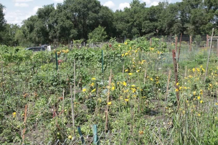 The expansive Highwood Hills (Battle Creek) Community Garden.