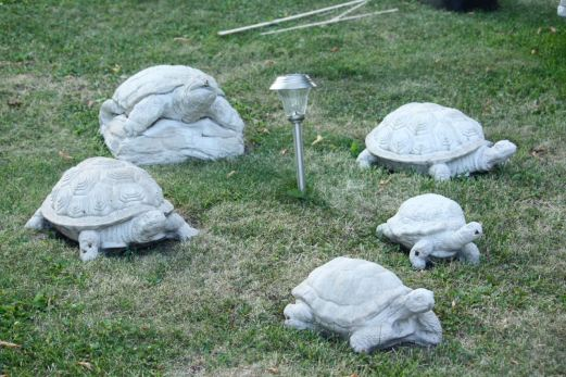 A tortoise family warily watches me.