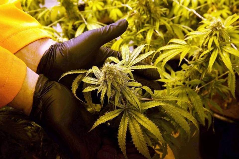 State Awards Medical Marijuana Growing Permit To McKeesport And Greene County Companies