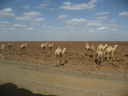 Deserto Dida Galgalu