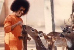 Baba_with_more_deers