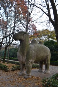 Stone Camel (Photos by Emily Shea)