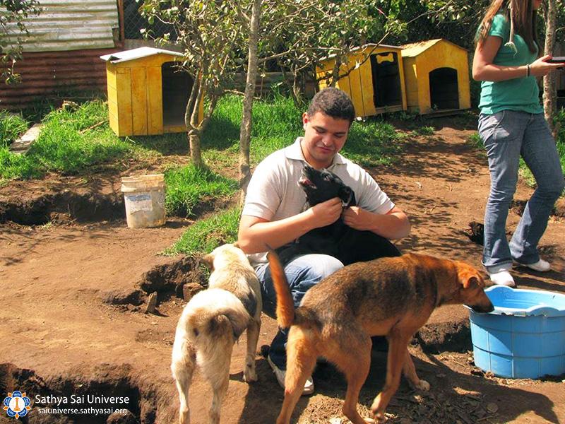 guatemala-service-to-animals-2017-perros3