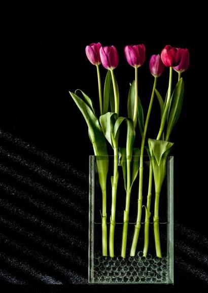 braiden_blossoms-Flowers Portfolio_Tulips_2013