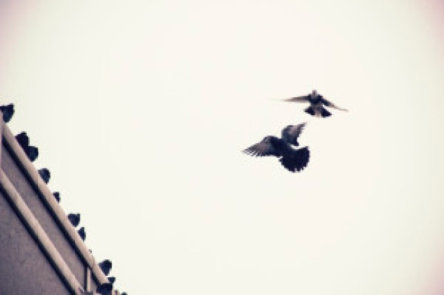one-flew-over