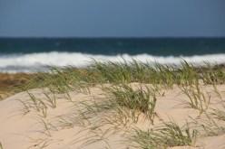 Une dune, comme ça...