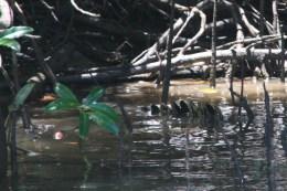 Croc!!!