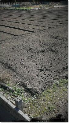 人間が耕してならした畑に猫の足跡がたくさん。 ふかふかしたところを、散歩したかったのでしょうか(笑)