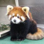 天王寺動物園情熱大陸コロナ禍での通常営業を再開!『生態的展示』飼育員や獣医達の奮闘とは!