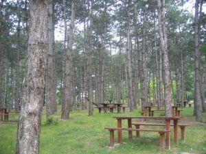 sapanca il ormanı