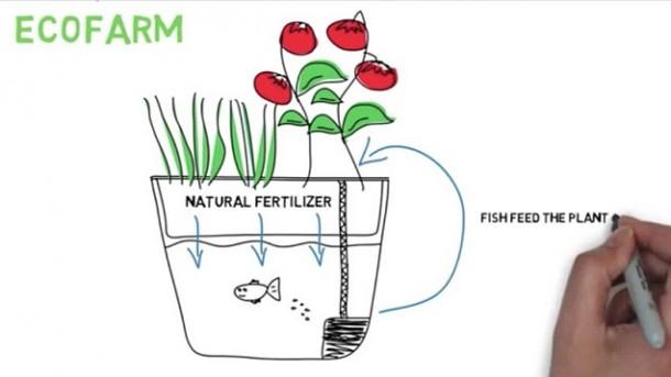 EcoFarm 2