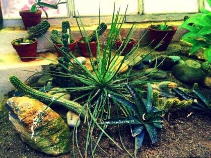 Menacing cacti