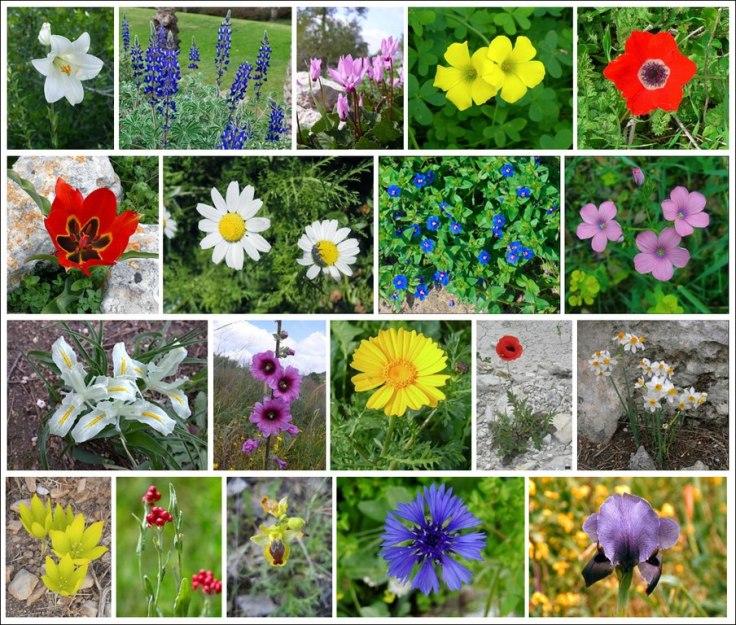 פרחים ארצישראליים