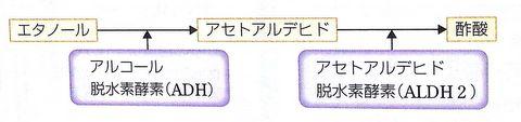 1-ADH&ALDH
