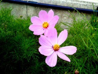 flower0514