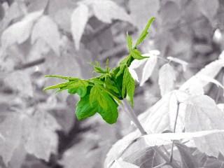 Green Fresh Green Spring Plant  - moritz320 / Pixabay