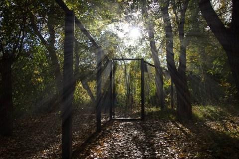 Rays Trees Morning Nature  - S-rover / Pixabay