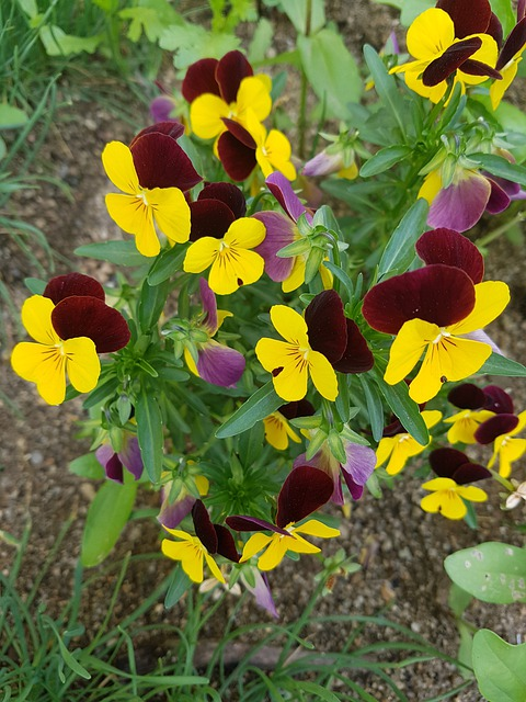 Yellow Flower Marigold Calendula  - dpkj89 / Pixabay