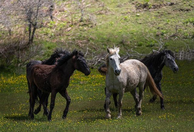 Wild Horses Animals Farm Pony  - Atlantios / Pixabay