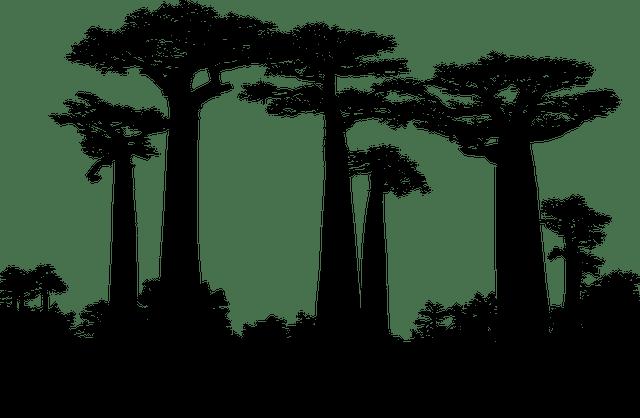 Forest Trees Silhouette Baobab  - GDJ / Pixabay