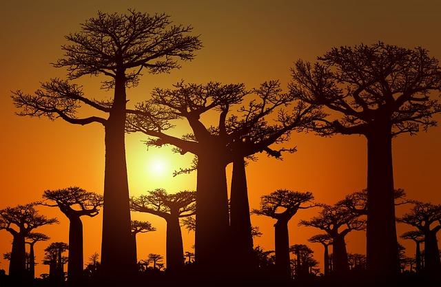 Sunset Sunrise Dusk Dawn Landscape  - Artapixel / Pixabay