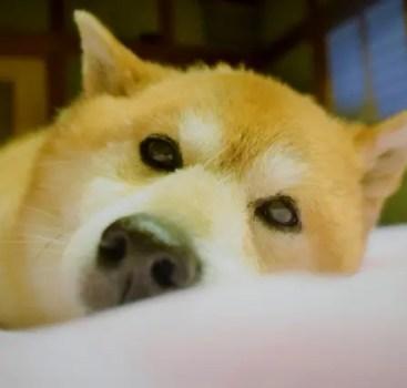HSPの特徴:内外からの刺激を敏感に受けて不眠になりやすい