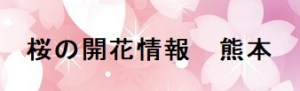 桜の開花情報 熊本