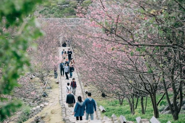 沖縄 桜の名所