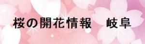 桜の開花情報岐阜